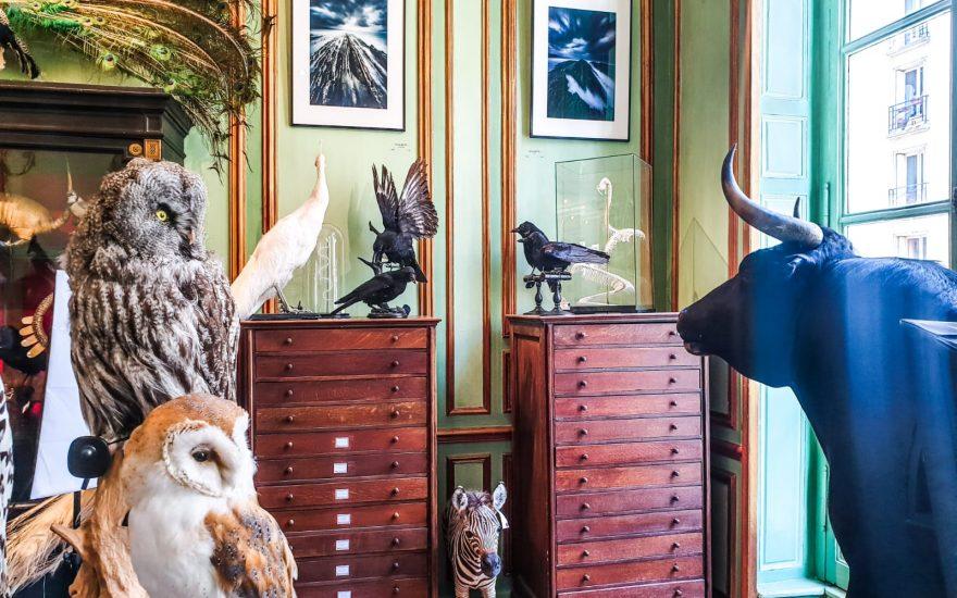 Salon des beaux arts-Deyrolle-3